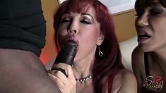 Two big breasted cougars get together to enjoy the pleasure a huge black rod provides