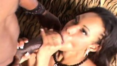 Hot Pleasure Bunny has a massive black dick taking her cunt to orgasm