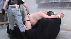 Chubby balding, married dude is getting his ass spanked and sucks dick
